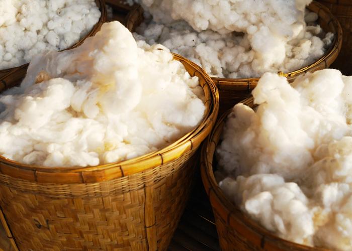 Ferme de moutonà Chambéry - La Ferme des Belines