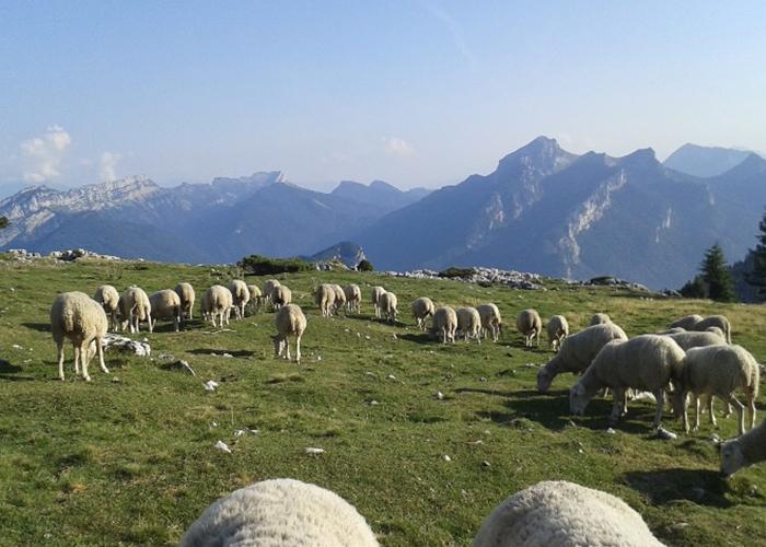 Visite de la ferme à Chambéry