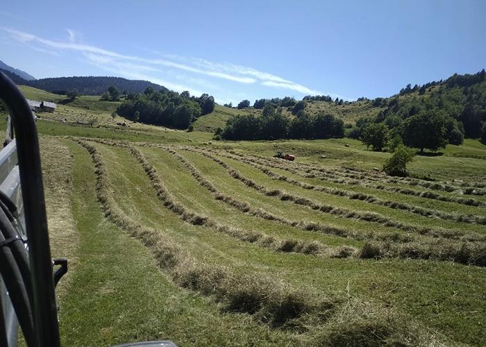 Les foins à la ferme à Chambéry